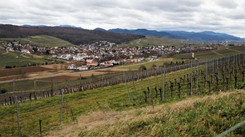 24 Pfaffenweiler v. Batzenberg aus, 01.02.20