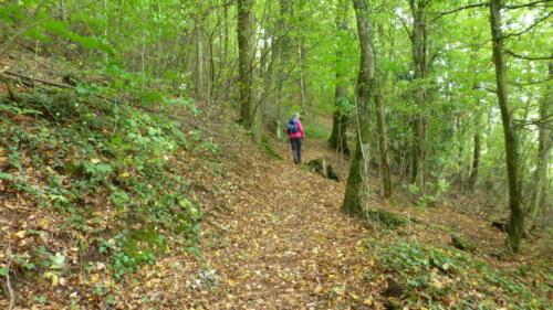 """Waldpfad auf dem Wolfacher Genisserpfad """"Schlossblick"""""""