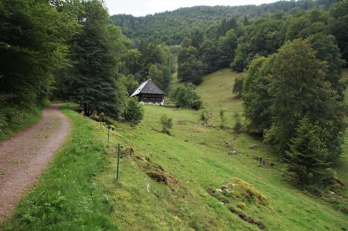 39 Bruggerhof im Wildgutach Tal, 06.09.19